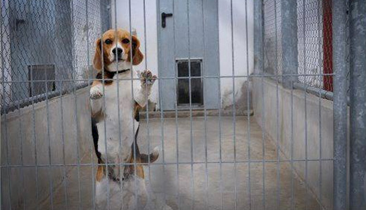 Beck, Doherty Introduce Bill to Save Cats & Dogs from Death Sentences