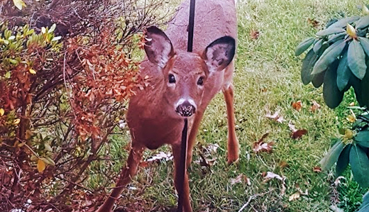 Oroho's Legislation Addressing Nuisance Deer Passes Senate Environment Committee
