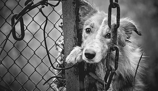 Holzapfel, Wolfe & McGuckin Sponsor Anti-Tethering Bill to Prevent Inhumane Treatment of Dogs