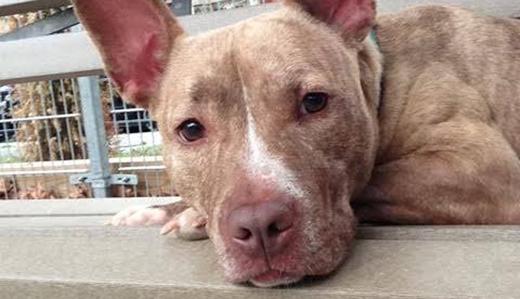 Kean Bill to Criminalize Dog Fighting, Punish Ring Leaders Now Law