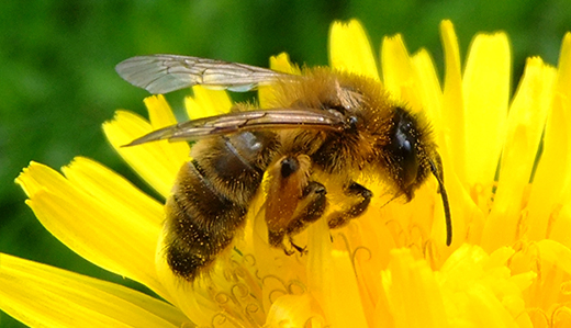 SIGNED: Bateman Bill to Protect Bees From Pesticides