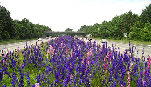 Now Law: Holzapfel/Wolfe/McGuckin Bill Requiring Use of Native Plants for Roadside Planting