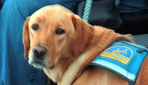 Gov. Signs Allen's 'Charlie's Law' to Protect Service Dog Access to Public Spaces