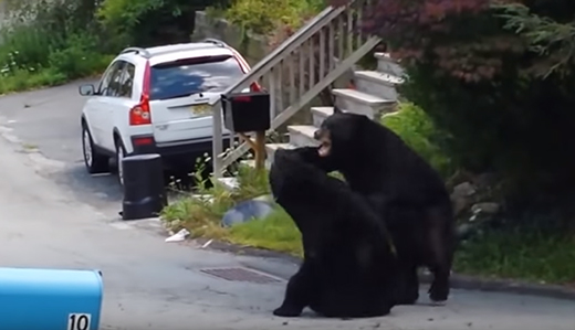 Oroho, Space & Wirths: Murphy and DEP Playing Divisive Politics By Ending Bear Hunt