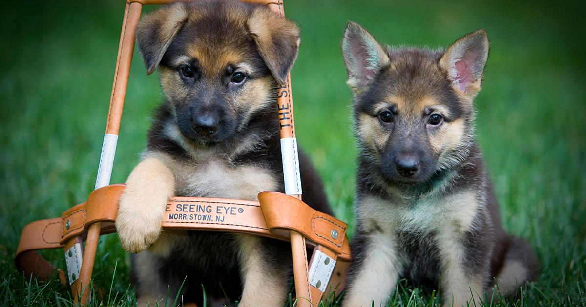 Bucco Bill Designating Nj State Dog Passes Committee
